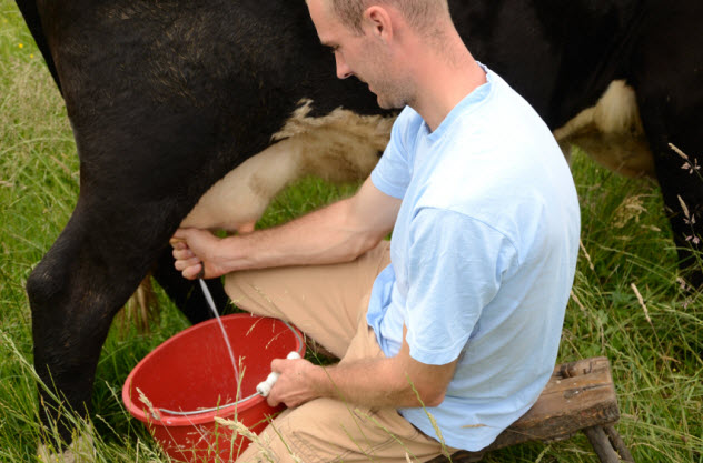 9b-milking-cow_000016890015_Small