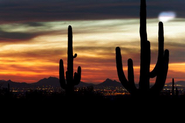 4c-cactus-night-sky_35233444_SMALL