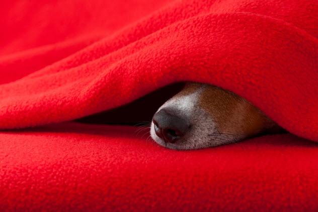 6c-sleeping-dog_81261665_SMALL