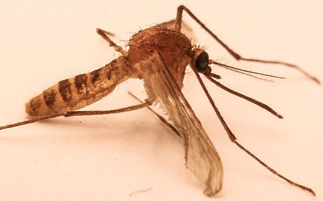 7-london-underground-mosquito