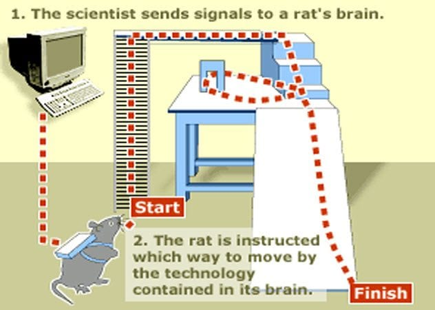 9-remote-controlled-rat