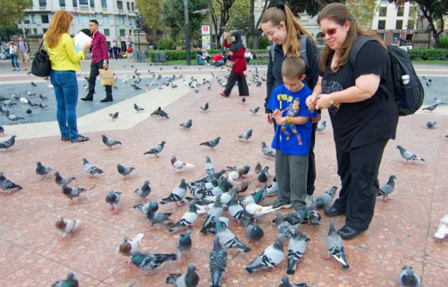 6-feeding-pigeons_000051140336_Small
