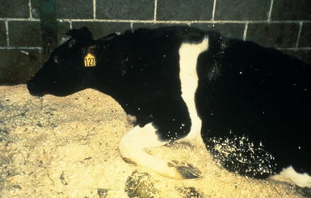 9-mad-cow-disease