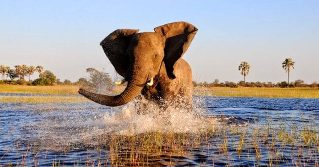 elephant-okavango-delta