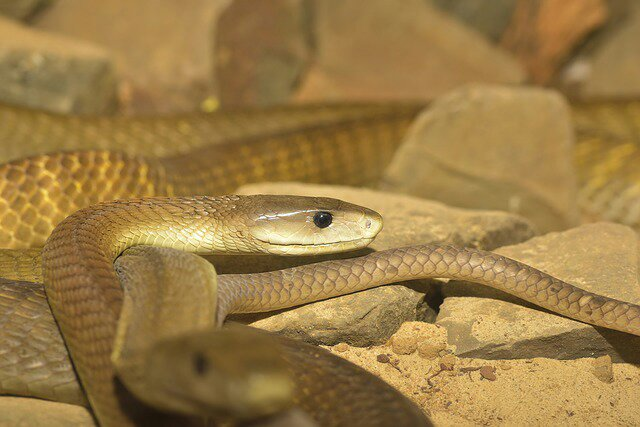10 Most Venomous Creatures In Africa