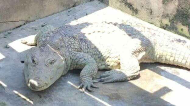 The Mysterious Nigerian Crocodile That Answers Prayers