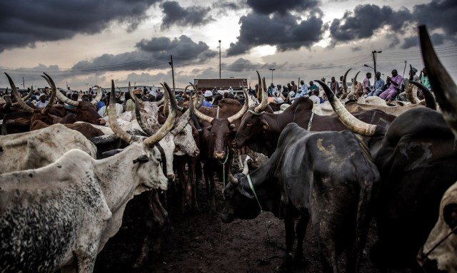 Uganda to register cattle and issue them 'birth certificates': minister