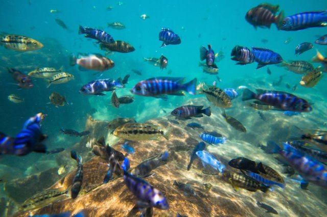 Lake Malawi has more fish species