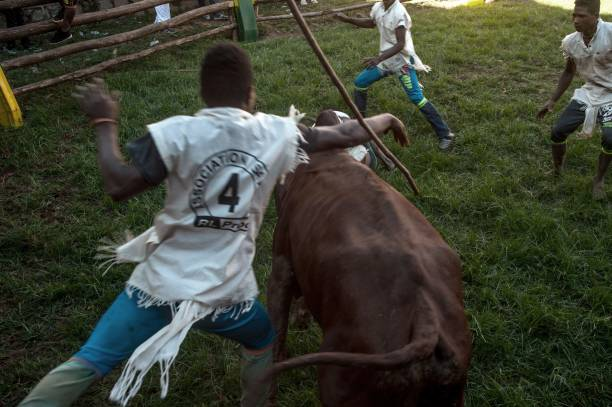 'Savika' – The Extremely Dangerous Traditional Bull Wrestling in Madagascar