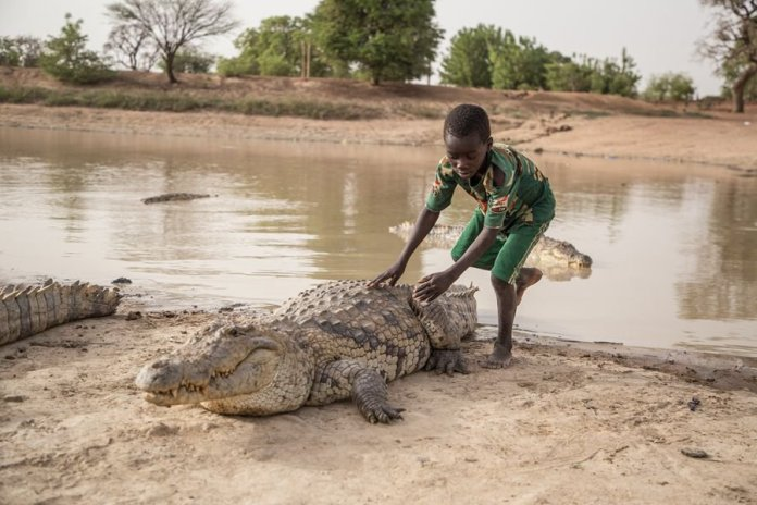 The African Village Of Bazoule Where Crocodiles and Humans Live Side by Side in Peace