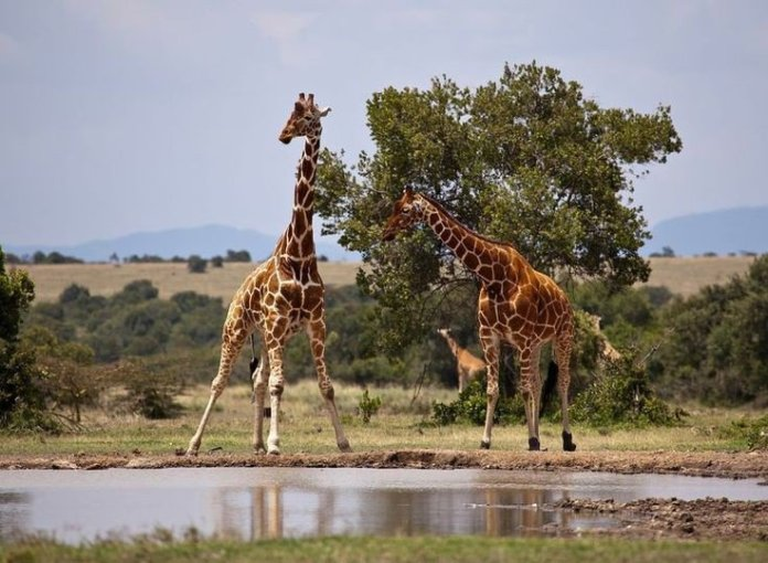 Kenya tourists attractions