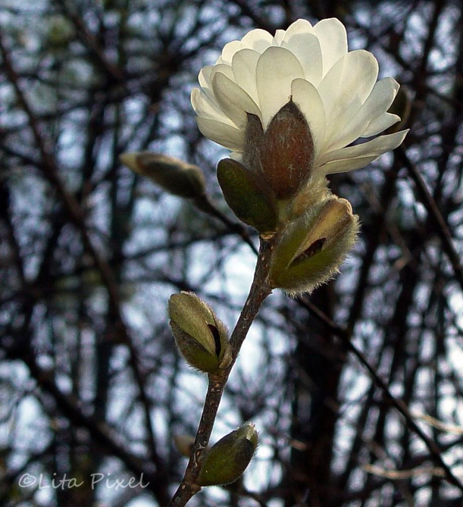 Our Georgia Bloom (2/2)