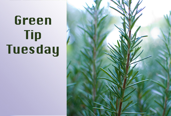 Green Tip Tuesday herb scents