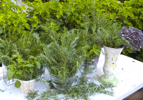 herbs in vases