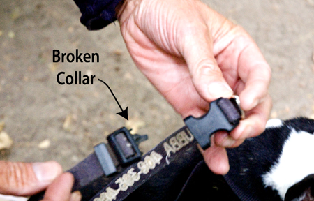 Broken Dog Collar