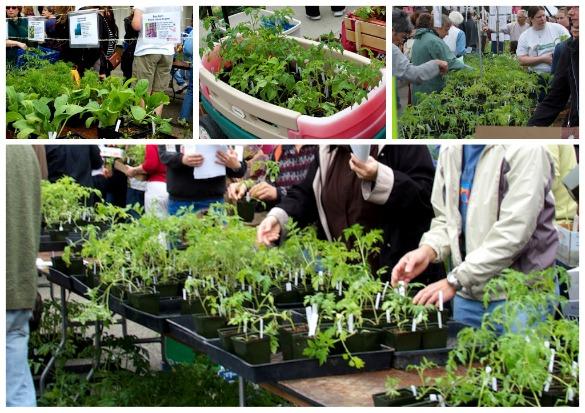 Master Gardener Sale