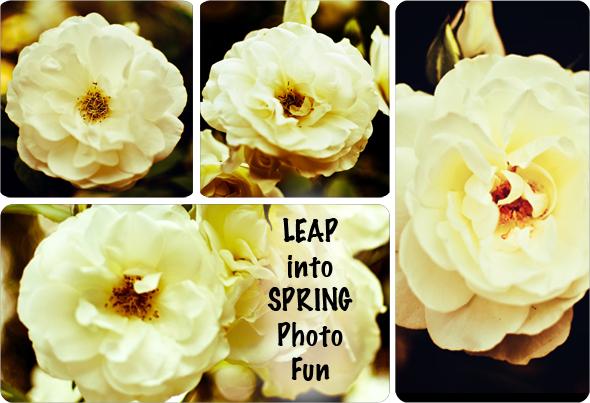 Leap Into Spring Photo Fun