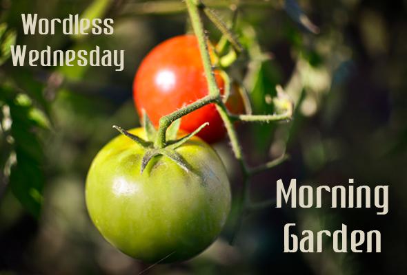 Wordless Wednesday Morning Garden