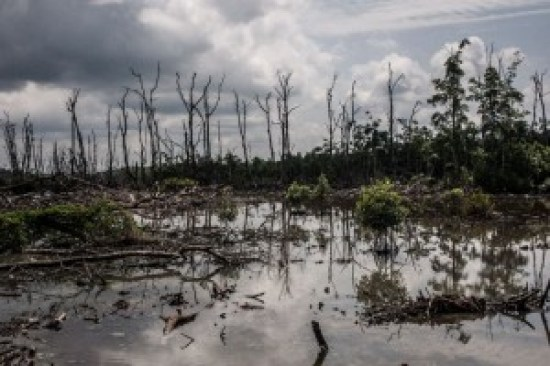 Ecological denigration of the Niger Delta swampland due to Oil prospecting activities.