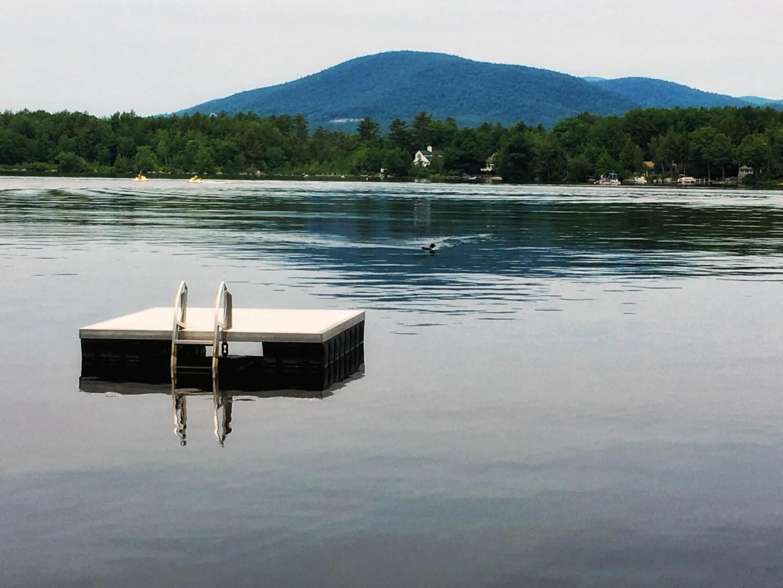 Lake Winnipesaukee Loon
