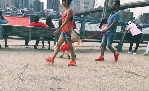 Cute dog on the Brooklyn Heights Promenade