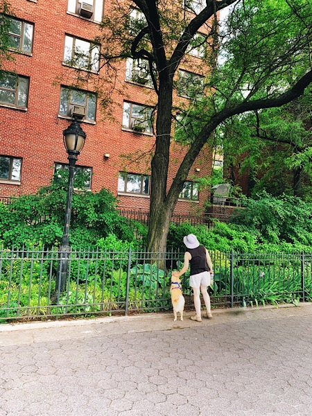Cute dog along the Brooklyn Heights Promenade