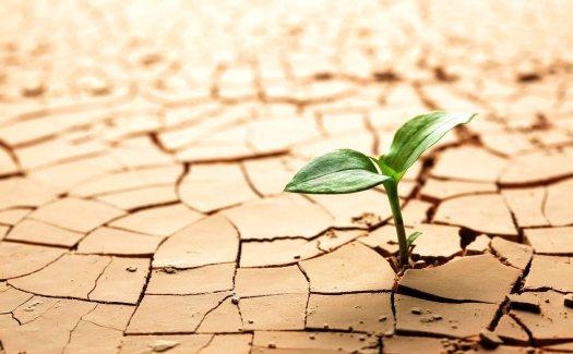 resiliencia y covid