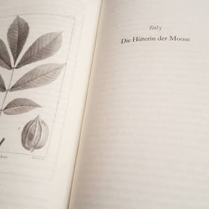 Das Wesen der Dinge und der Liebe ~ Elizabeth Gilbert
