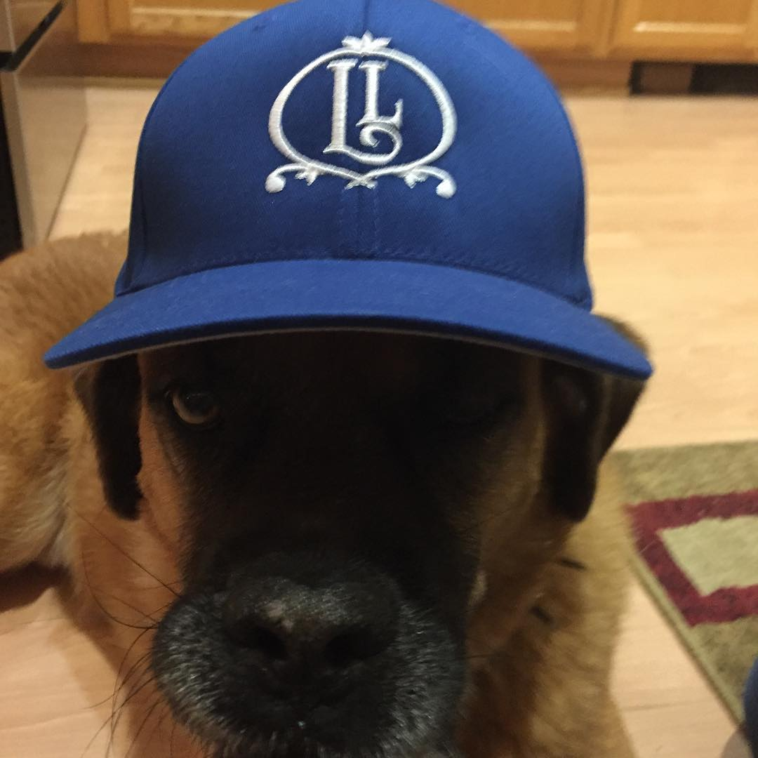 Even dogs approve of the new Lithermans gear. #howmuchcanyoucarry #concordnh #lithermanslimited #mhplikes spice