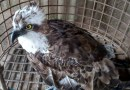 A Rare Migratory Bird That Flew to Kenya from Europe has died