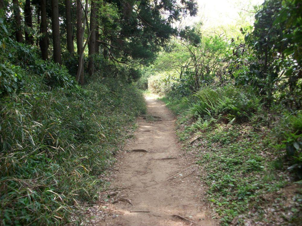 大丸山から先のハイキングコース