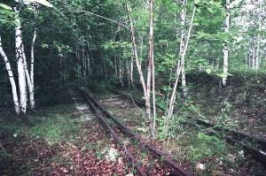 Заброшенная узкоколейка в подмосковном лесу