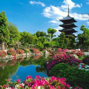 MY NEW JAPAN TRIP