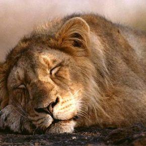BETTER SLEEP, BETTER LIFE