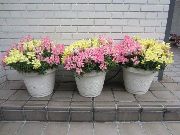 flowers japan 12