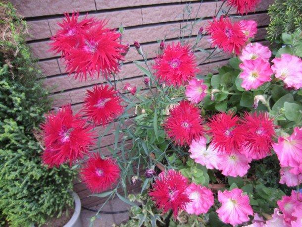 flowers japan 14