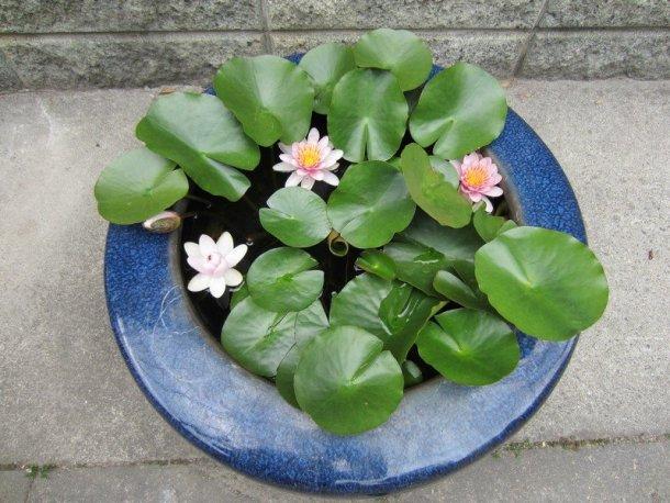 flowers japan 40