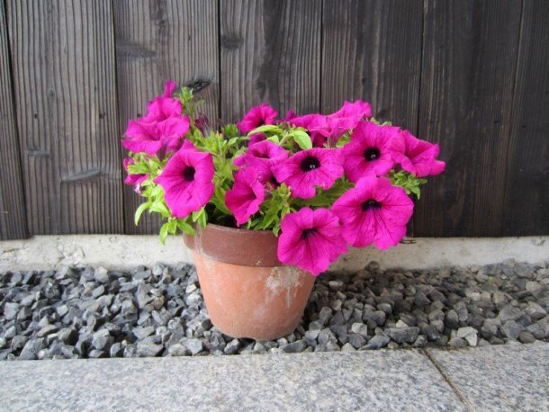 flowers japan 51