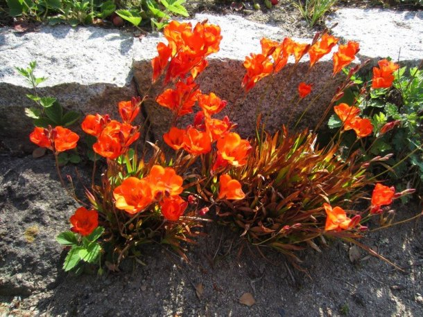 flowers japan 55