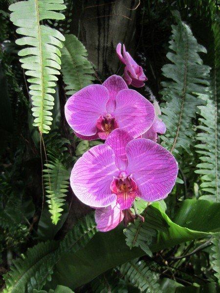 flowers japan 72