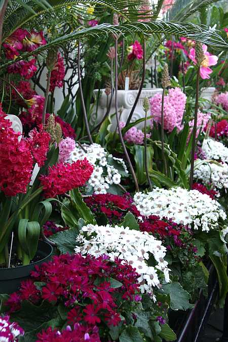 red and white bunches