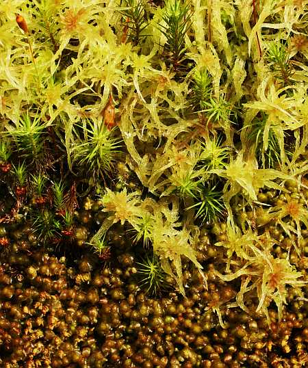 three greens moss