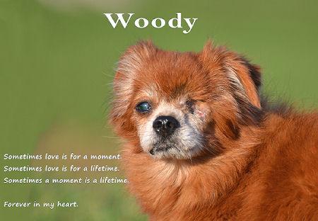 WoodyAfdrukken1JPEG