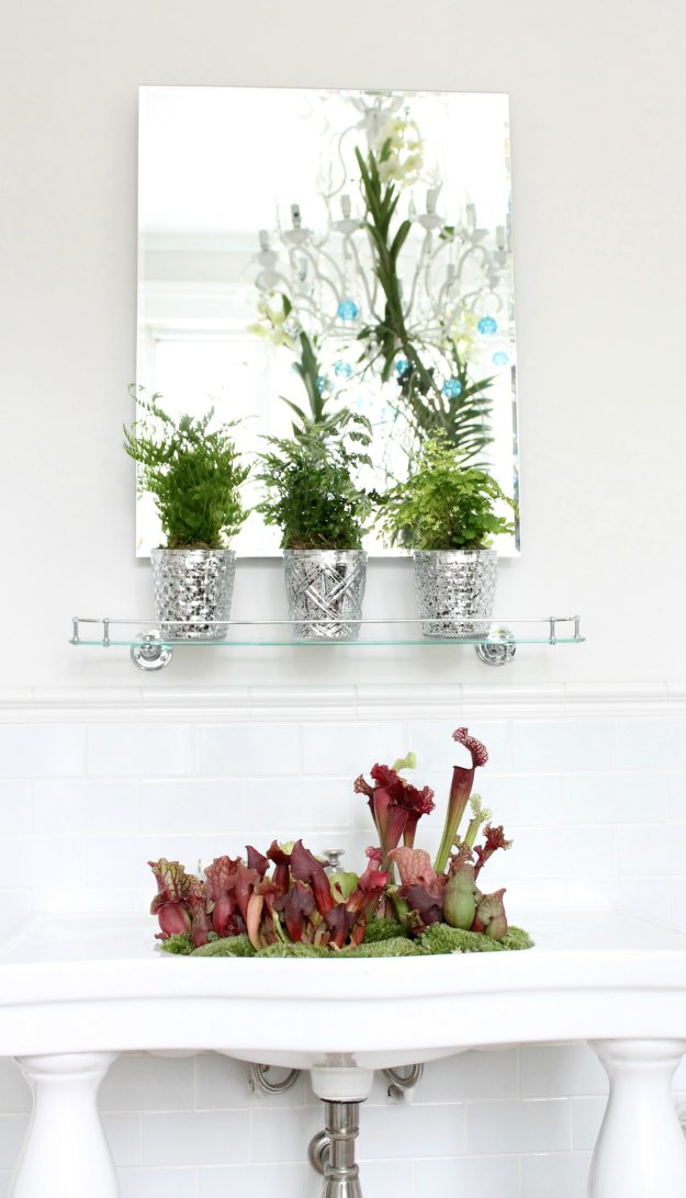 Bathroom-plants-by-Ian-Drummond-photo-by-Little-Big-Bell