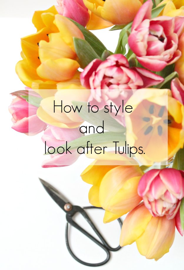 How-to-style-and-look-after-Tulips-by-Geraldine-Tan-of-Little-Big-Bell