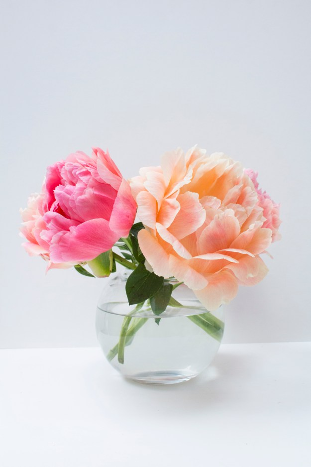 Coral-Sunset-peonies-Little-Big-Bell