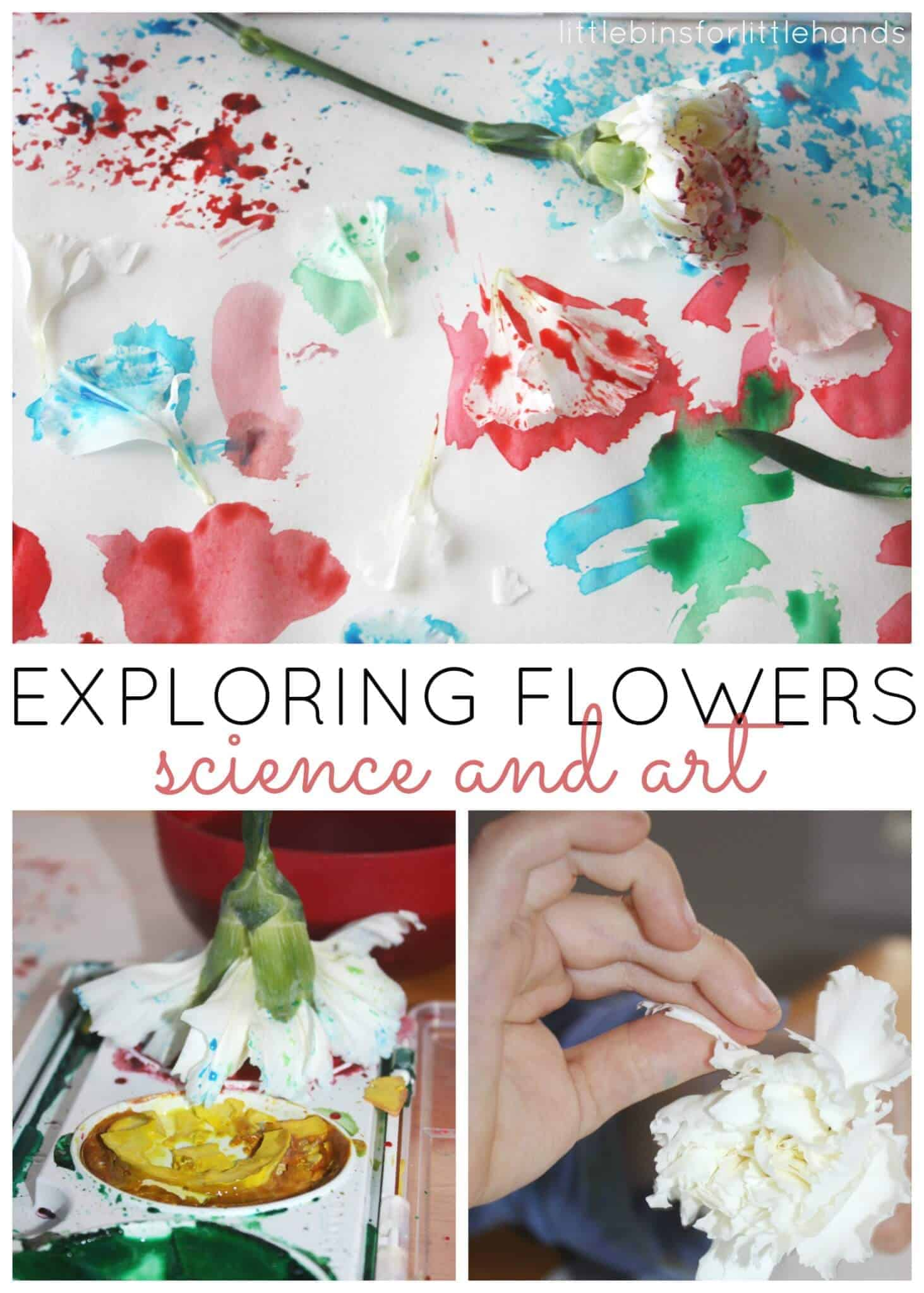 Flower Science Art Exploring And Painting With Flowers