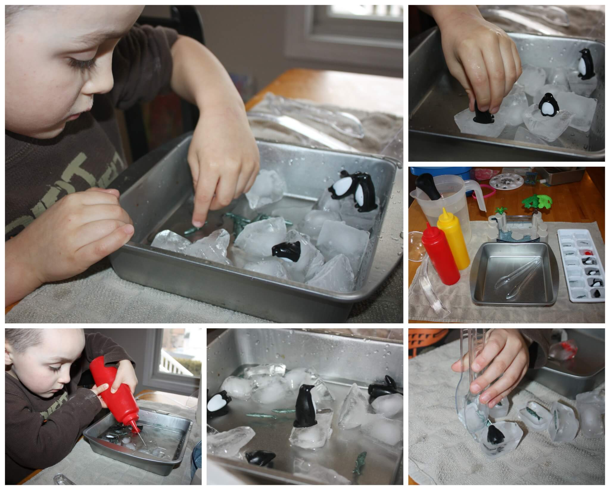 Learning About Penguins Amp Ice Melting Activity Science