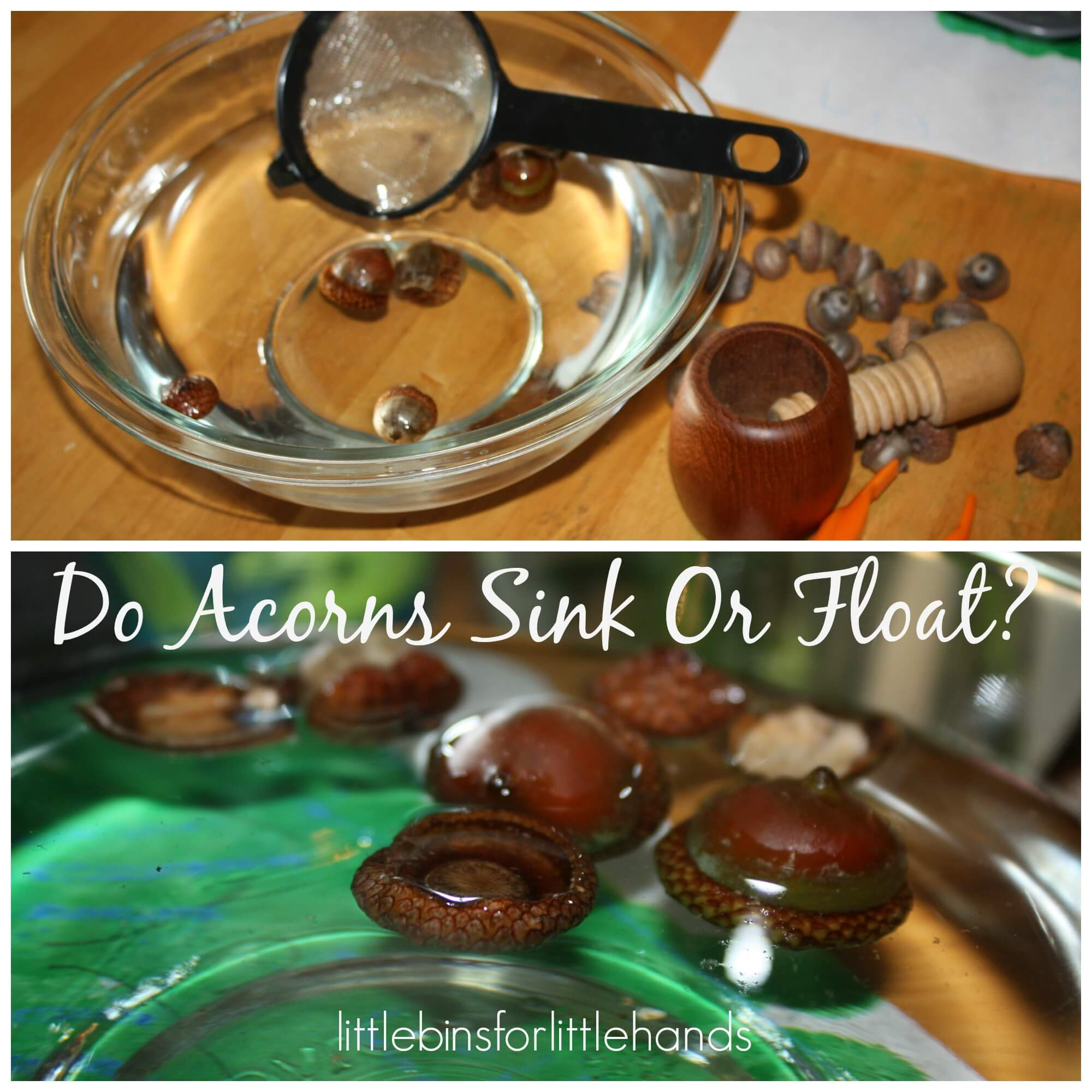 Acorn Fine Motor Activities For Fall