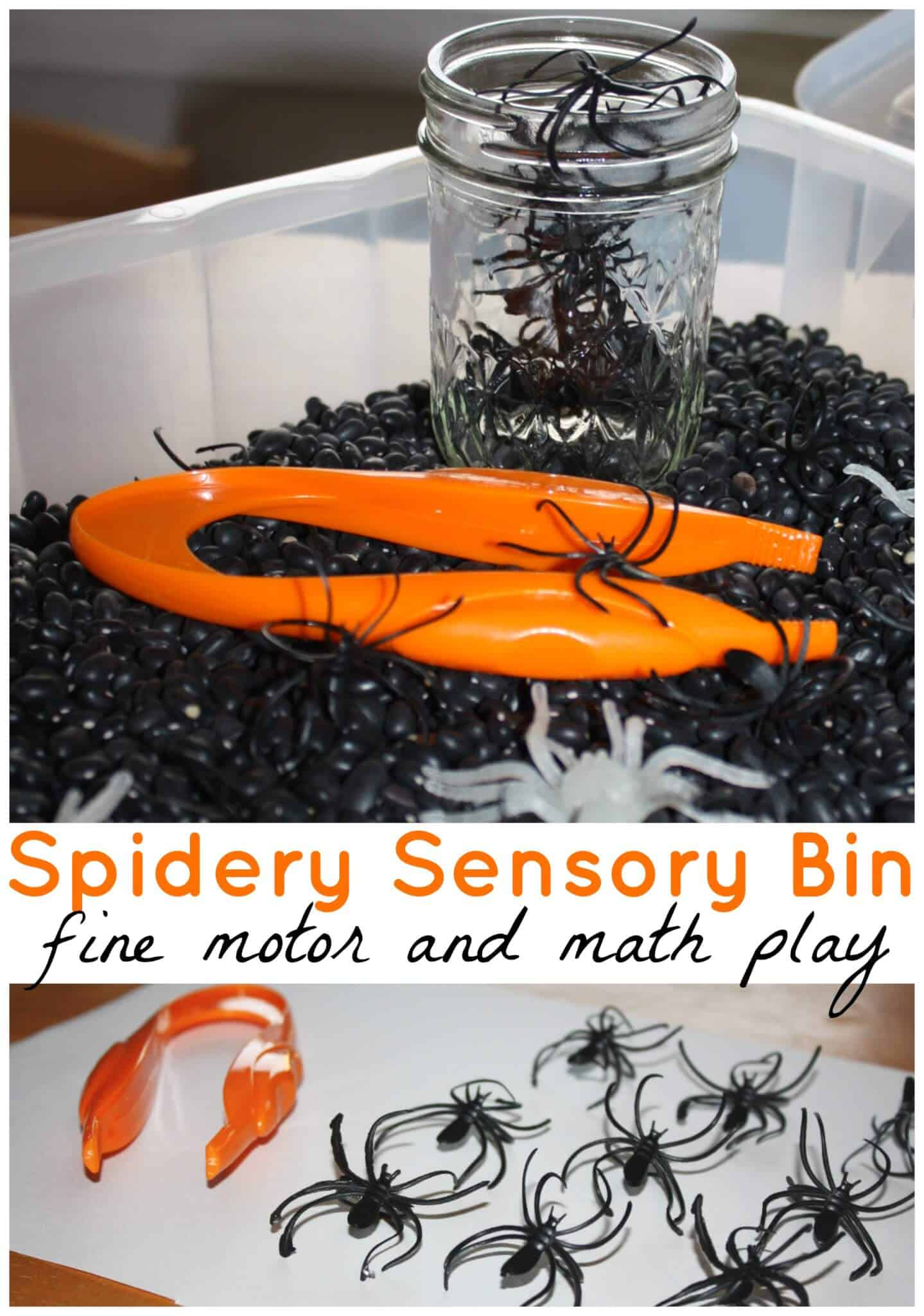 Spider Sensory Bin Halloween Spider Math And Sensory Play